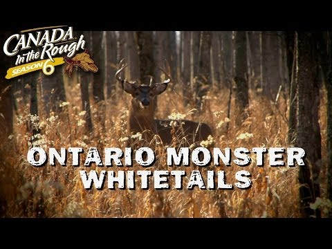 Ontario Monster Whitetails | Web Exclusive (Mature Deer Hunt)
