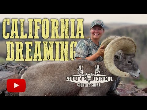 California Bighorn Sheep Hunting