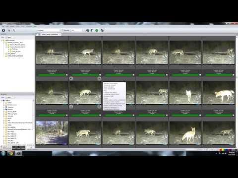 Wildlife Camera Database test