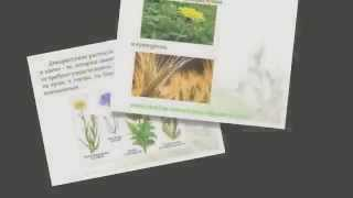 """Презентация на тему """"Растениеводство (4 класс)"""" (Екатерина)"""