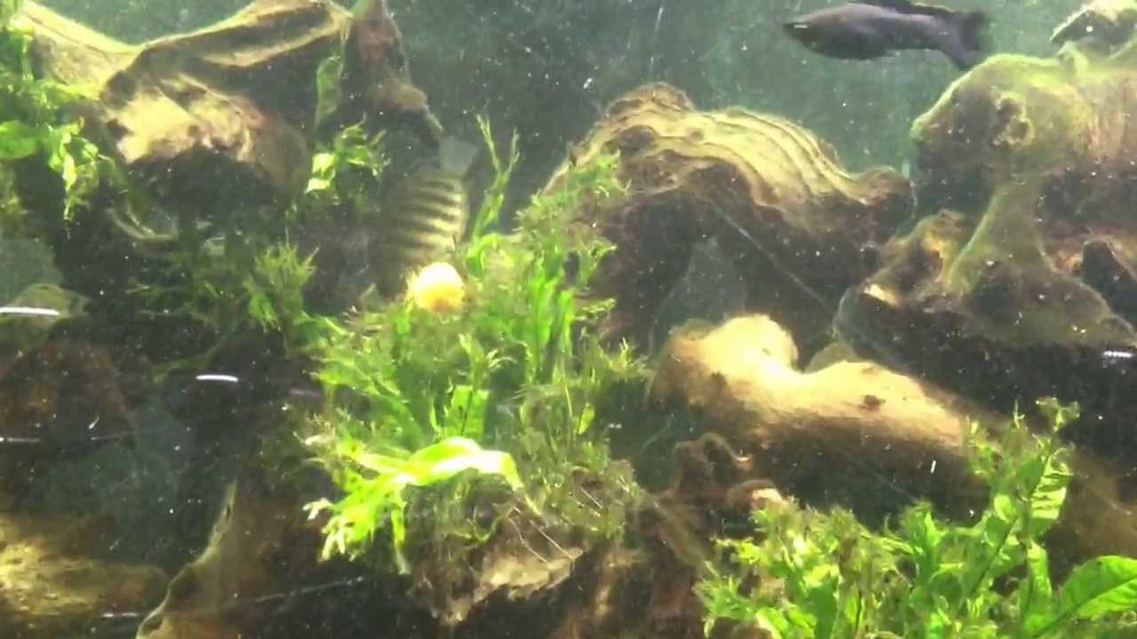 More Underwater Plants - YouTube