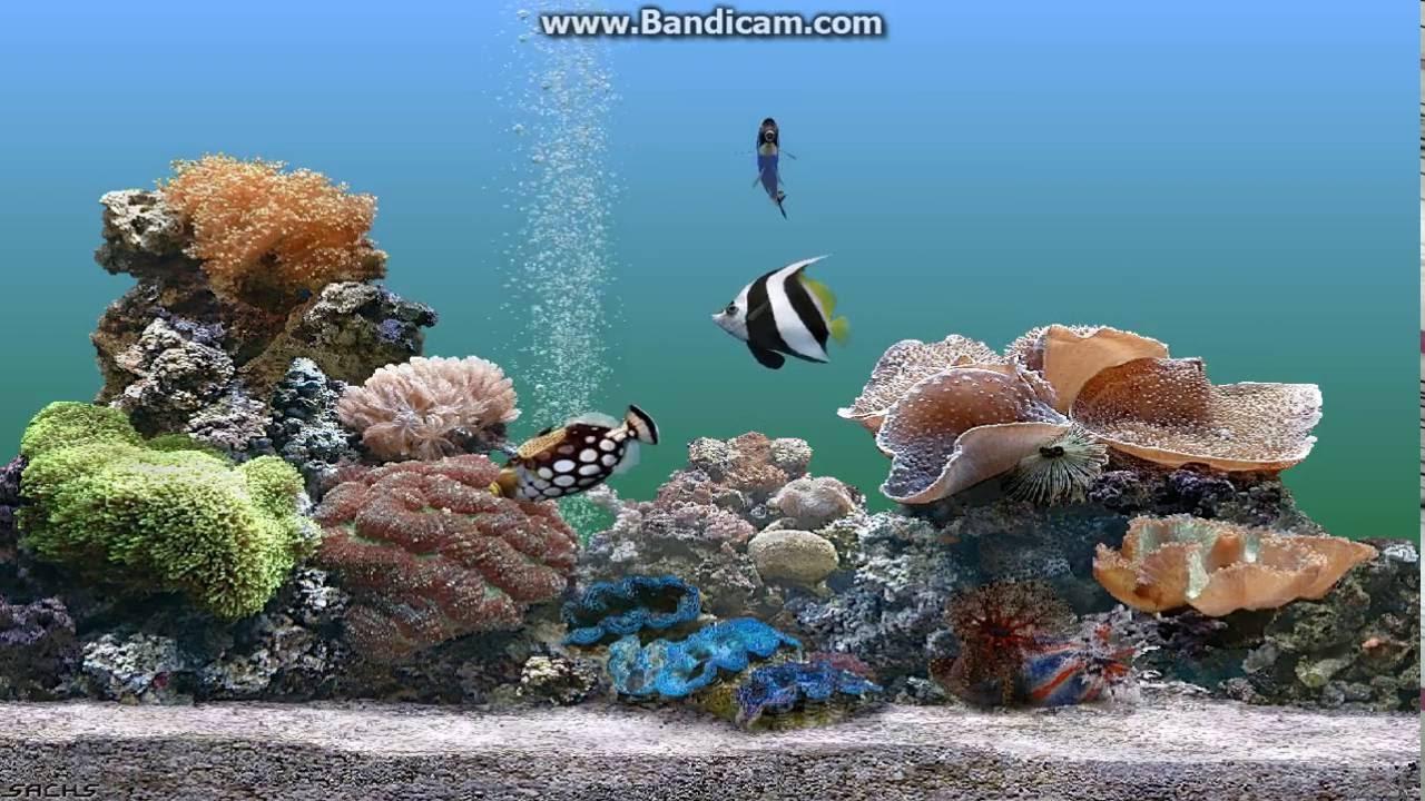 Fish aquarium for windows 7 screensaver - Windows Xp Plus Screensavers On Windows 7
