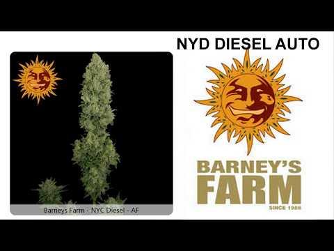 NYC DIESEL AUTO DE BARNEY´S FARM CON ABONOS FAST FOOD DE B.A.C.