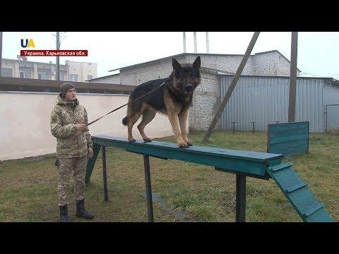 Собаки-пограничники