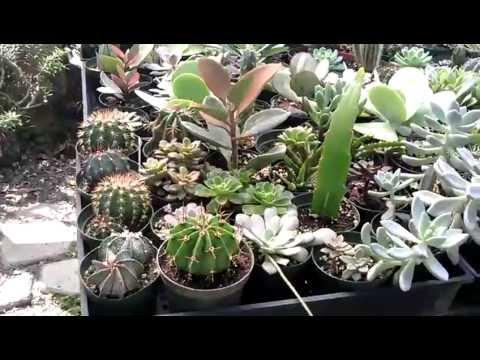 Cactus y suculentas youtube for Cactus y suculentas