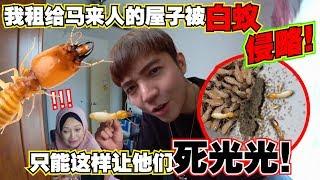 租给马来人的屋子被白蚁攻击!这样让它们死光光!原来大水蚁就是白蚁的DRONE OMGG【DailyVlog】