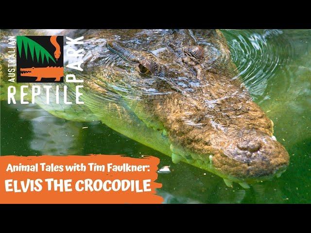 ANIMAL TALES WITH TIM FAULKNER | EPISODE 19 | ELVIS THE CROCODILE