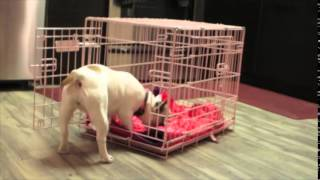 Crate Training Tips For Dogs