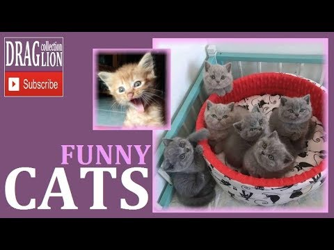 Funny Cats Compilation 5 -February 2018 Cats Videos Make Your Day Happy