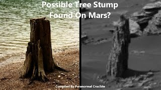 Possible Tree Stump Found On Mars?