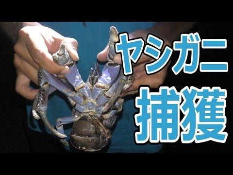 【巨大ヤシガニ現る】所持金0円で釣り生活 5話【伊是名島編】