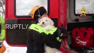 Italy  Three puppies rescued from rubble of avalanche hit hotel