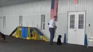 World Class Dog Kennels Akc Star Puppy Class, Crystal Lake, Il