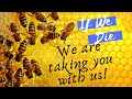 Why Bees Matter? Help Protect Our Pollinators! Save the Bees [VIDEO]
