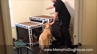 Memphis Doghouse Promo