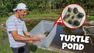 bringing-my-turtles-into-backyard-pond