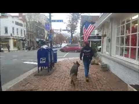 High Drive and High Energy German Shepherd, Ham!  German Shepherd Dog Training in Virginia