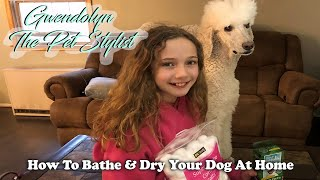 How To Bathe & Dry Your Dog At Home