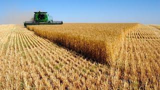 видео Система оплаты труда работников растениеводства