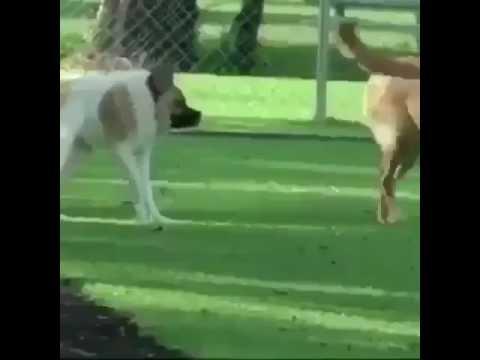Dog wit no neck