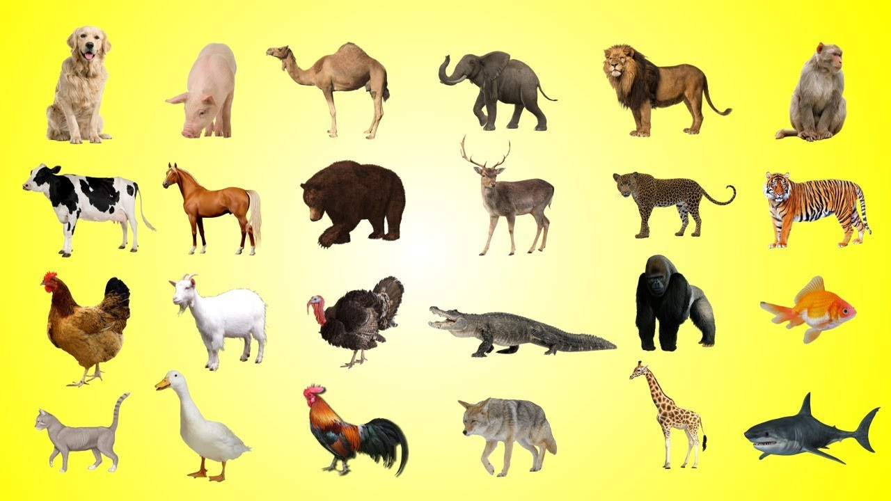 animals different names colors children learn sounds toddlers
