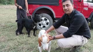 Doggo Argentino Best Moment 2019 || Canecorso || Peacock || Pakistan Bully || SCOOBERS