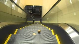 Potatoes Descending A Staircase Ascending