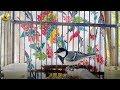 Variasi Suara Glatik Watu Tanpa Jeddah Gacor  Mp3 - Mp4 Download