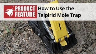How to use the Talpirid Mole Trap