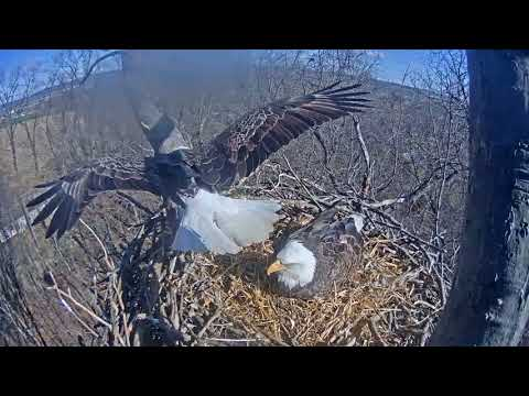 Last record of Liberty being at the nest that I have  2018 03 16 10 54 36