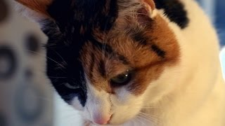 This Deaf Cat Gets Overstimulated And Angry Very Easily | My Cat From Hell