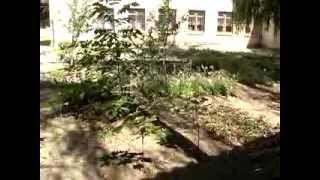 Видеоматериал о специальной (коррекционной)  общеобразовательной школе-интернате № 29 IV вида