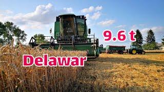 #11 Żniwa 2019 - Pobiłem swój rekord w plonie pszenicy 😃 #214 Pszenica Delawar