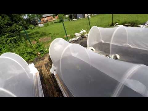 Pest Free Organic Gardening 13 – Proteknet insect barrier and Dipel for cabbage loopers