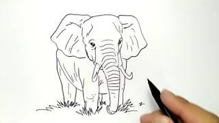 cara menggambar anak gajah dengan mudah / how to draw elephant kid easy