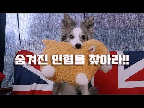 보더콜리 페퍼는 숨겨놓은 장난감을 찾을 수 있을까? 인형찾기 게임!!! / 강아지 유튜브