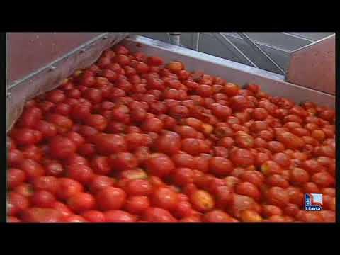 Foto de quadro de tomatescereja vermelha em fundo preto de madeira