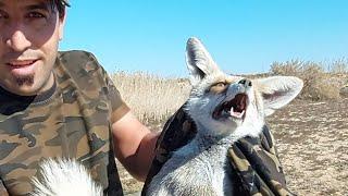 شاهد صيد ثعلب في الطبيعة 🦊🦊انتظرونا صيد الحيوانات ان شاءالله