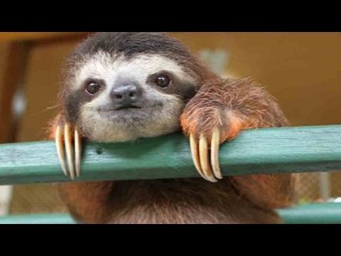 10 САМЫХ МЕДЛЕННЫХ животных в мире!