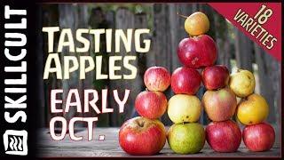 Gambar cover 🍎-18 Apple Varieties-🍎 Taste Test w/ 4 New Seedling Apples from Breeding Experiments!