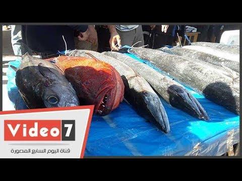ختام بطولة كأس مصر لصيد الأسماك بالغردقة وإعلان الفائزين اليوم  - 14:22-2017 / 12 / 16