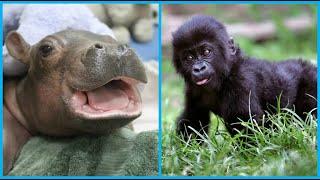Top10 animales salvajes que lucen adorables de bebes