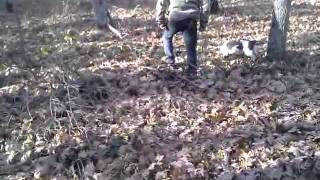 Truffle Hunting Dog By Kynagon