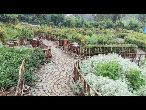 Ethiopia: Addis Ababa youth are making a living by cleaning and greening the city -- Addis Gardens