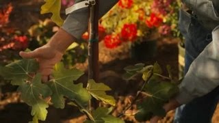 The Best Spot to Plant a Fig Tree : Professional Gardening Tips