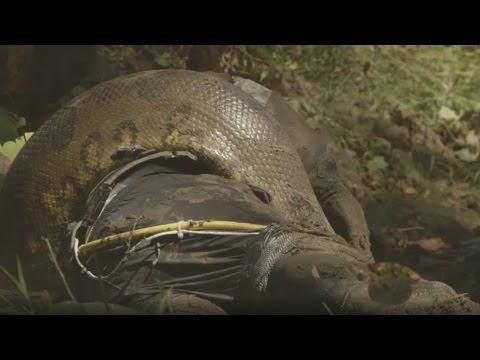 Misión imposible, un científico fracasó y no fue devorado por una anaconda