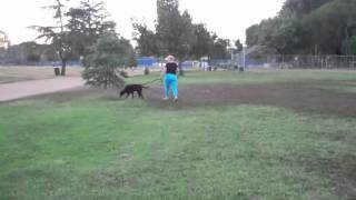 The Good Dog Minute 7/22/12: Leash Aggression Eliminated In 24 Hours