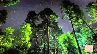 6 Hour RELAXING NIGHT FOREST SOUND   Sleep Relaxation Forest Night Sleep Background Sound ☯209