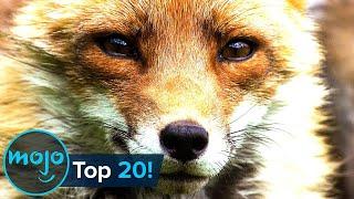 Top 20 Most Intelligent Animals