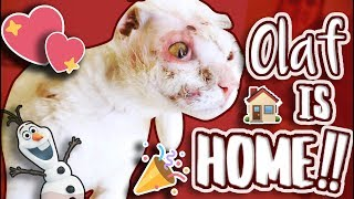amazing-olaf-the-miracle-cat-is-home